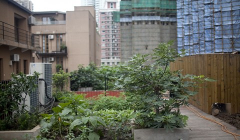 Organic Food is a Luxury in Shanghai